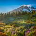 Mount Rainier National Park Paradise Meadows Wildflowers Superbloom Sunset Lupine Fuji GFX100 Fine Art Landscape Nature Photography! Washington State Art! Elliot McGucken 45EPIC Master Medium Format Photographer Fuji GFX 100 & Fujinon Fujifilm GF Lens!