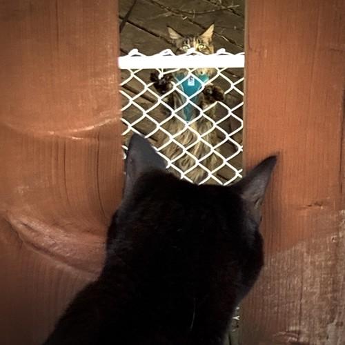 Martha meets the neighbour