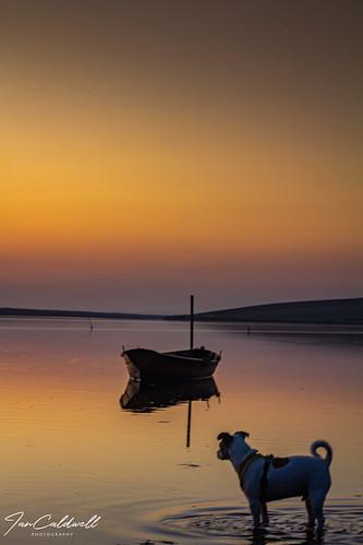 sunset boats boat sea orangesky reflection thefleet dorset iancaldwell photography dog jackrussell