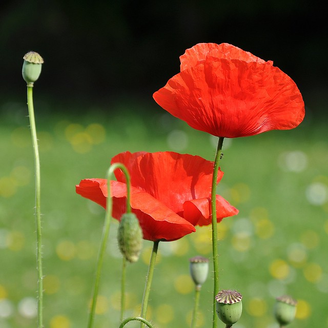 THE POETRY OF FLOWERS ♦ 10