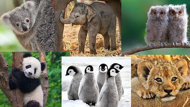 DOKU BABY ANIMALS AROUND THE WORLD