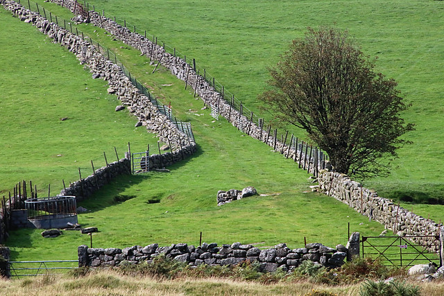 Dartmoor walls