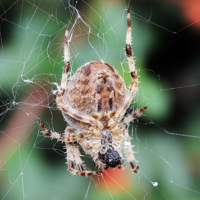 Same Spider - Another Day