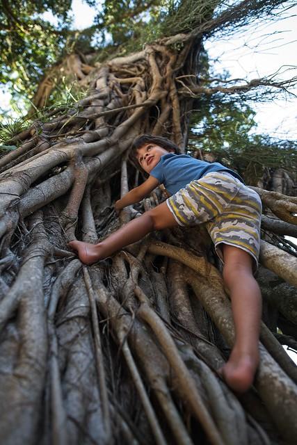 Diego escalador roots