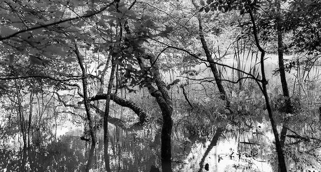 Chattahoochee River Pano
