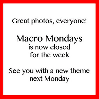 Macro Mondays is closed