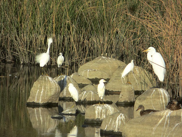 wechat for egrets