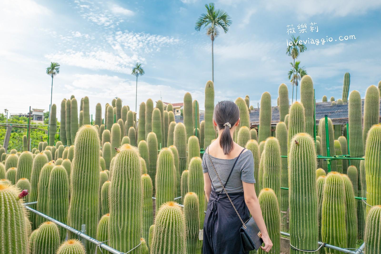 【彰化 Changhua】農村仙人掌園  50年巨大仙人掌拍出異國風照 @薇樂莉 Love Viaggio | 旅行.生活.攝影