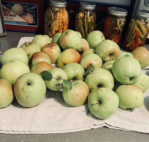 apple bounty from the lakehouse | by hannah.mcqueen13