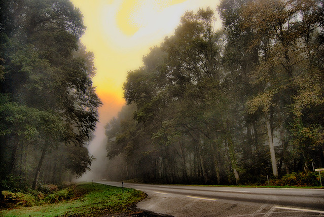 Just a foggy road...