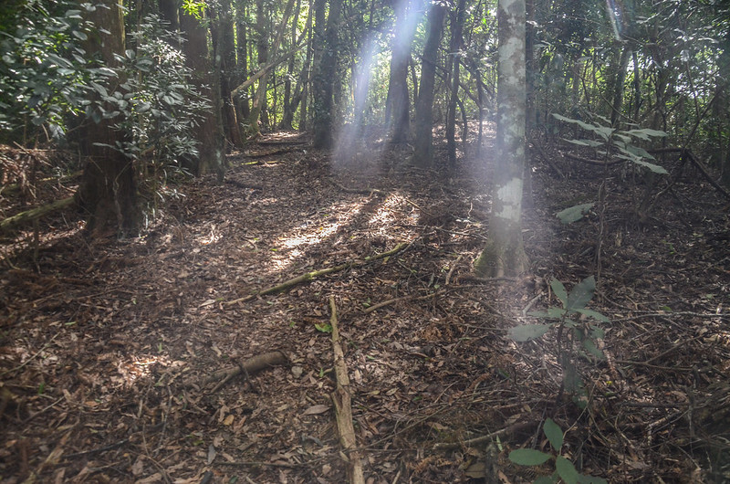 南坑山登山路徑 (2)