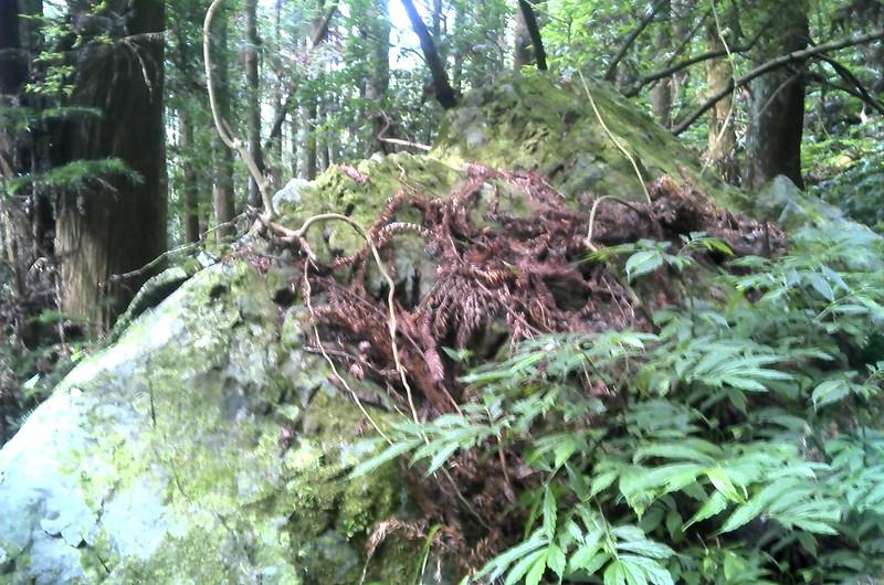 南坑山西北峰路徑巨石