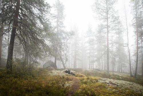 suomi finland autumn mist fall nature fog forest landscape amazing nikon europe d750 tamron jyväskylä syksy 2470mm vaajakoski kanavuori