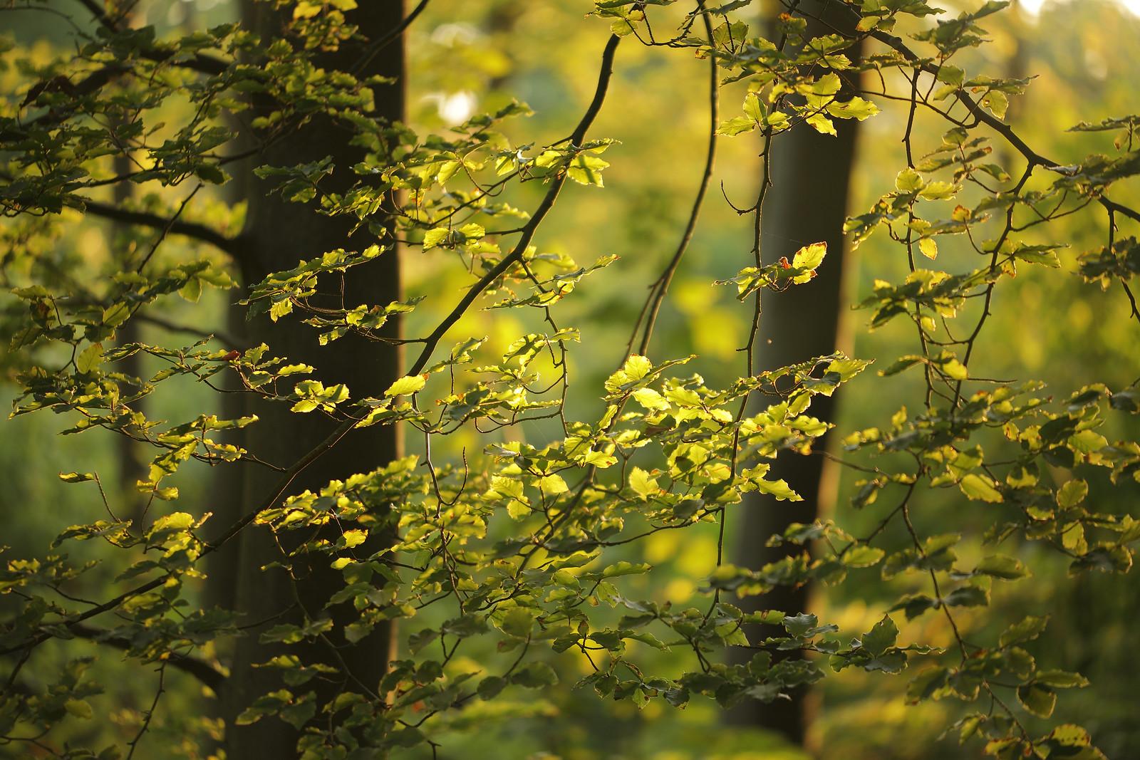 Friston Forest in September