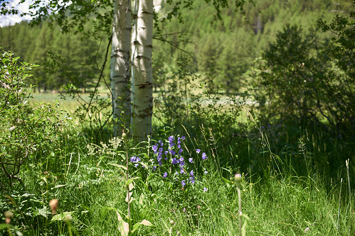 Val Ferret Summer Flowers