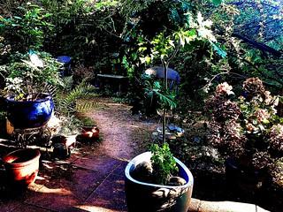 My Oak Bonsai with it's new pot. It has a Little friend, the 'Sorbus aucuparia' aka Vogelbeerbaum. It planten itself. Let's see if It works.