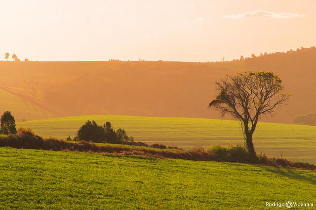 Agro Sunset