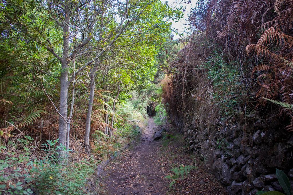 Sendero por Cuevas Negras en el Monte del Agua