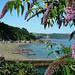 Looking towards East Looe town beach and the Looe Gig Regatta. Photographer Rosemary Spooner, Torquay