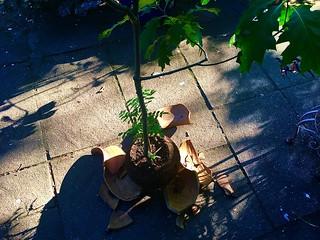 Some Plants Need a new Pot