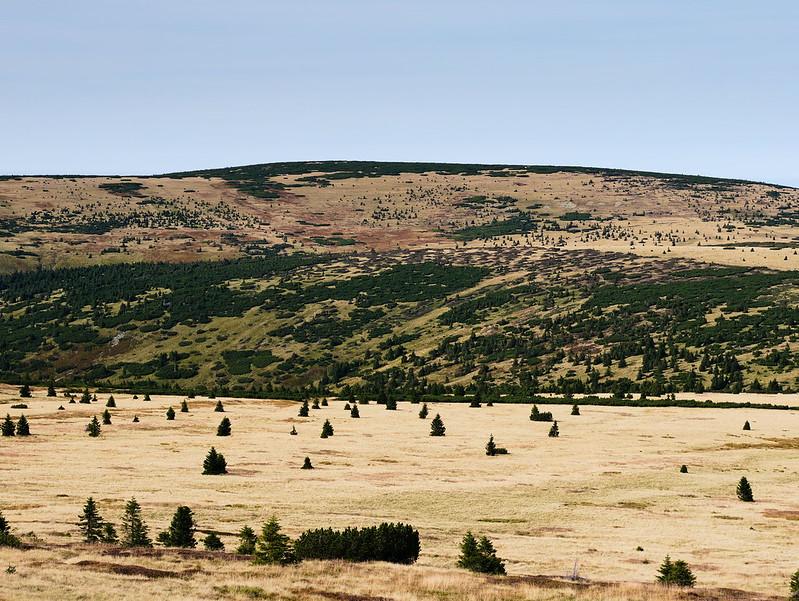 Stříbrný hřbet (Smogornia)