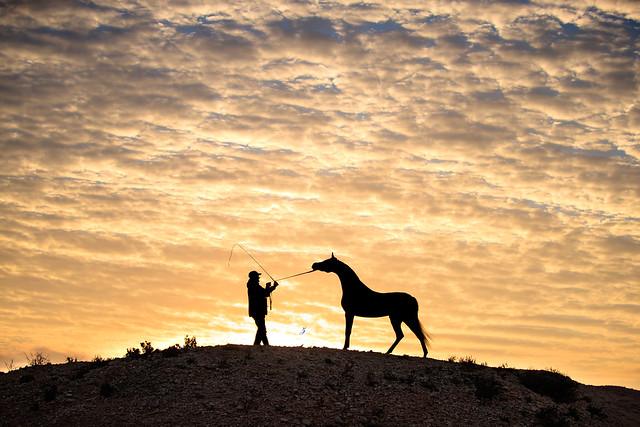 A sunrise silhouette of the Arabian horse.