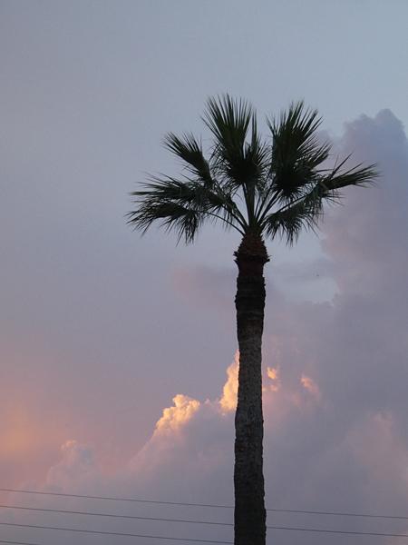 palmier sur ciel orageux