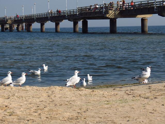 an der Seebrücke Ahlbeck