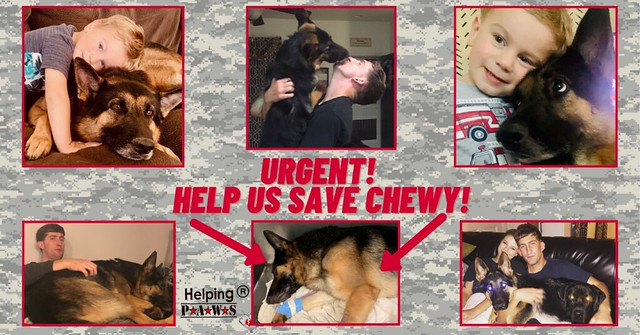 URGENT! HELP US SAVE CHEWY!