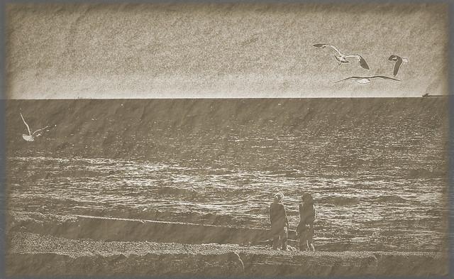 girls and gulls