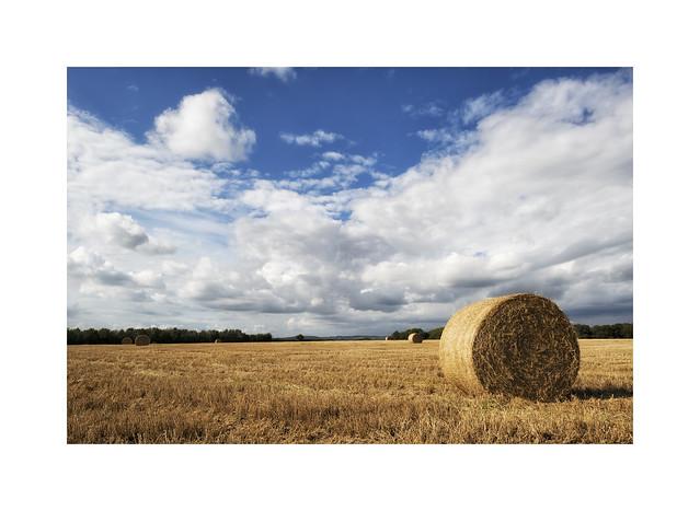 Hay bale harvest