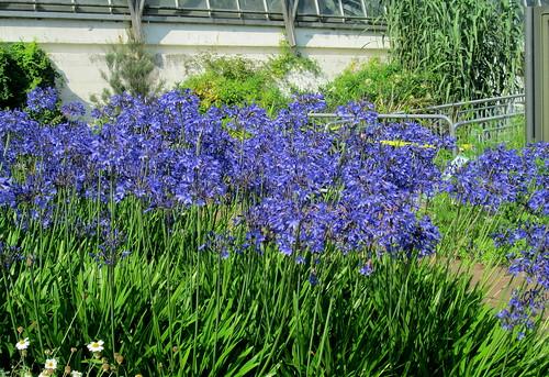 Edinburgh Botanic Gardens, Scotland