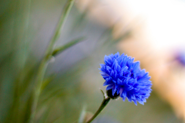 Blue Flower Bay