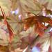 Leaves, 10.21.19