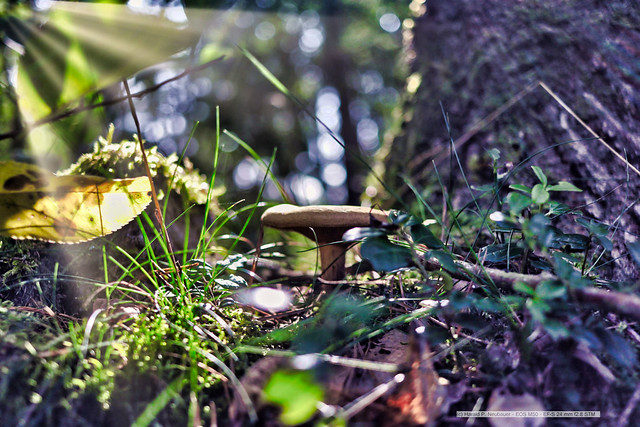 Yesterday in the forest - life and passing
