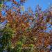 Fall colors #fall #autumn