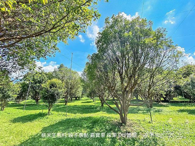 桃米生態村 南投埔里 親子景點 嘉寶果 採果 diy體驗