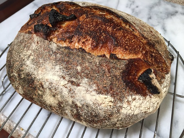 Whole Wheat 25% - Orange Confit