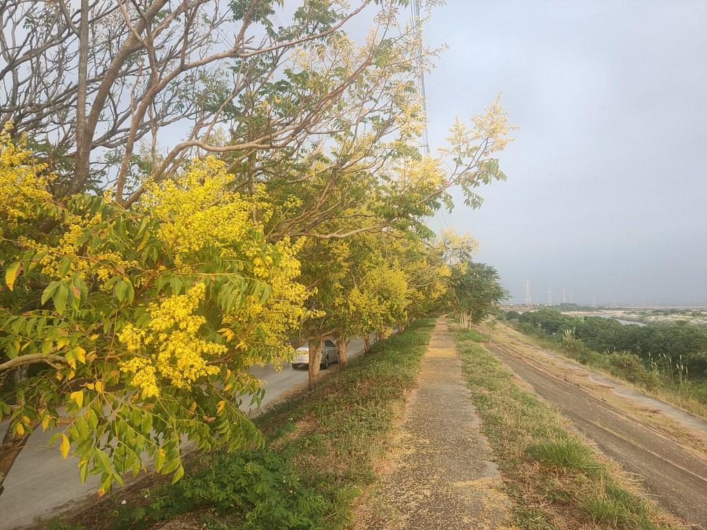 麻豆曾文溪畔 (4)