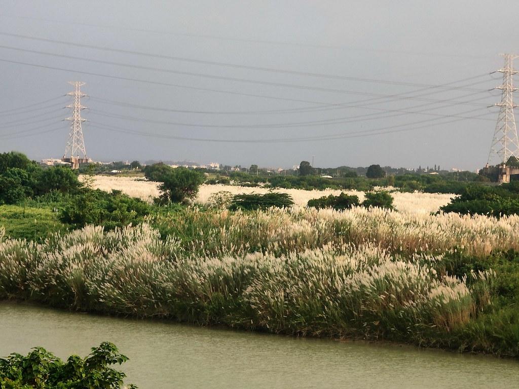 麻豆曾文溪畔 (8)