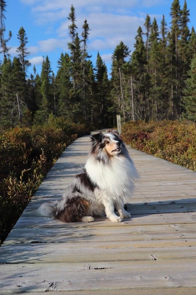 Nisu on a boardwalk
