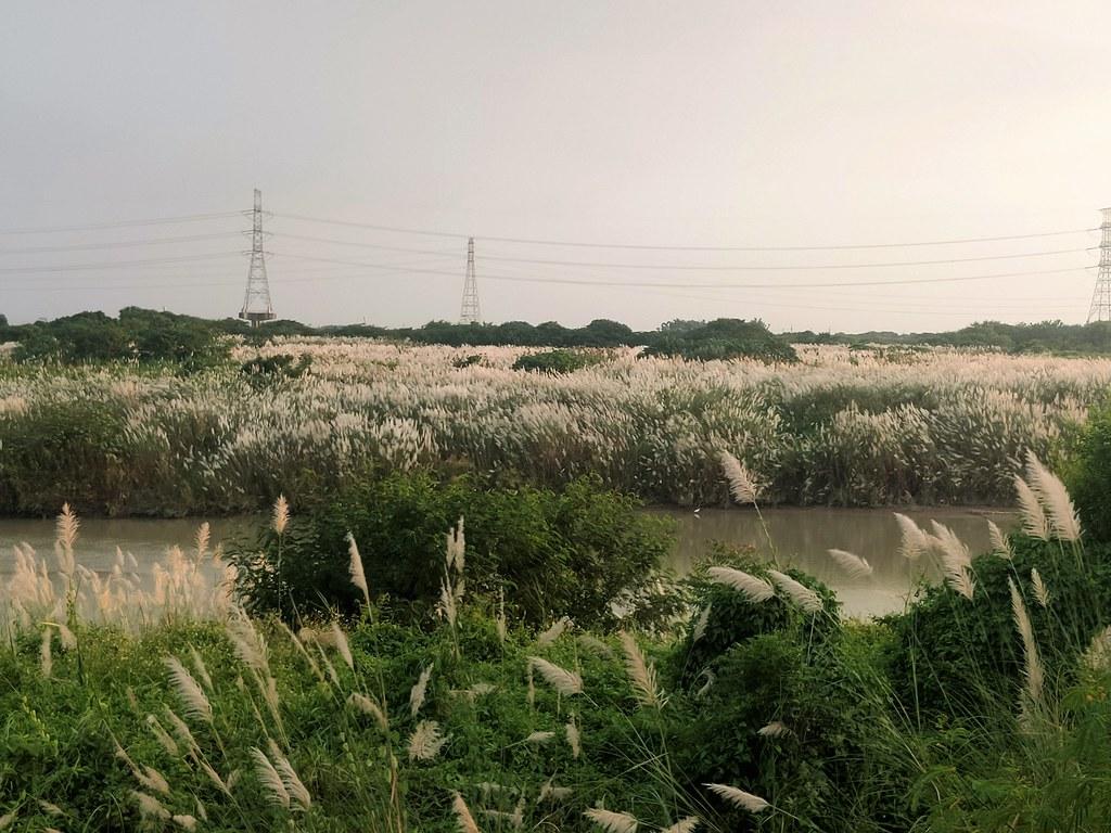 麻豆曾文溪畔 (7)