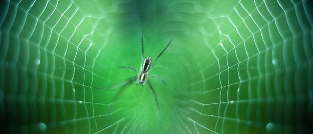 歡迎光臨 / Welcome to Perfect Spiderweb