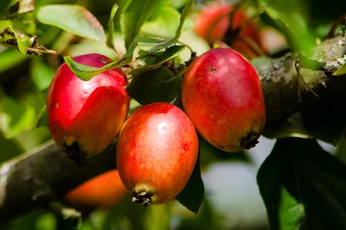 Autumn: mellow fruitfulness