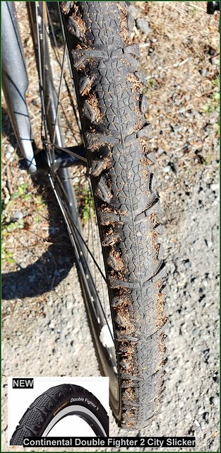 Bicycle Tires or Tyres?