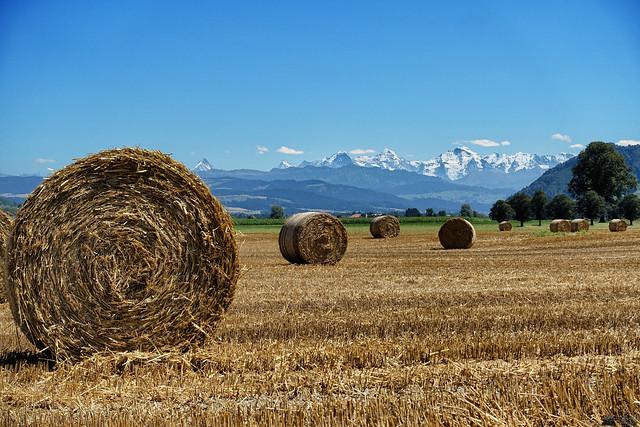 Swiss Rural Scenery