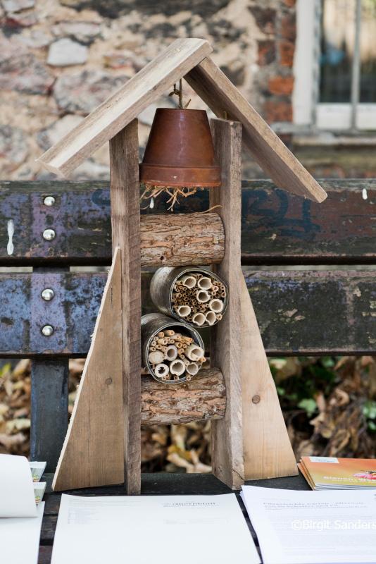 WEB_B-WUSST Insekten_22.09.20_©Foto Birgit Sanders__277