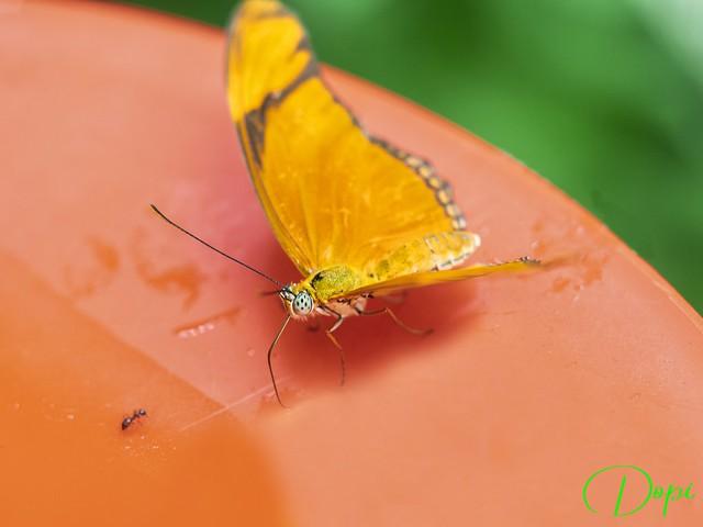 La Mariposa y la hormiga