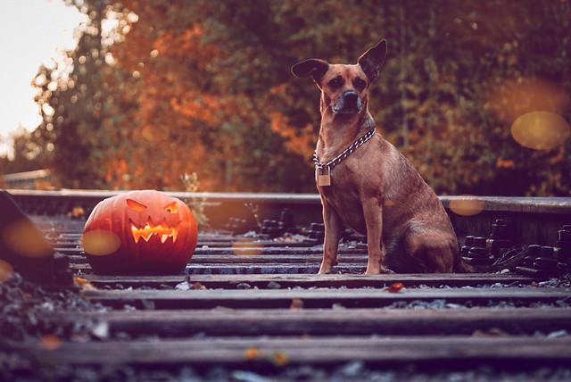 Halloween photoshoot for Tarmo