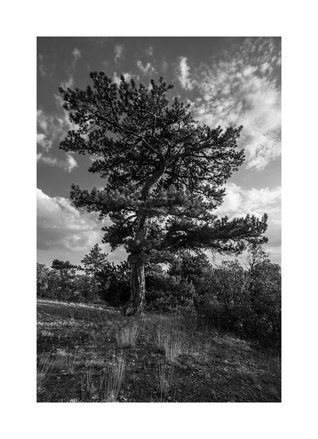 Beynam Forest